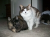 pet-sitting-dogs-cats-014_0
