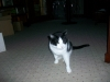 pet-sitting-dogs-cats-031