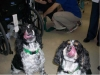pet-sitting-dogs-cats-034