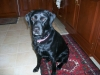 pet-sitting-dogs-cats-036