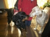 pet-sitting-dogs-cats-037