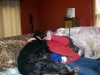 pet-sitting-dogs-cats-038