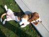 pet-sitting-dogs-cats-039