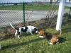 pet-sitting-dogs-cats-041